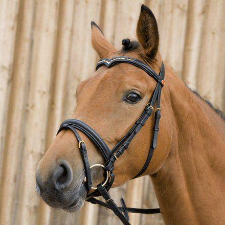 Kieffer Hoofdstel Katherina II Zwart Pony nodig? - ruitershopbeerens.nl