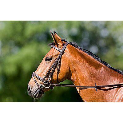 Excelsior Hoofdstel Diamond Zwart Pony nodig? - ruitershopbeerens.nl