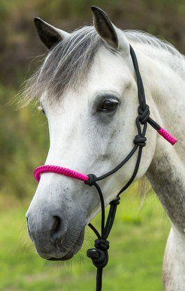 Ekkia Touwhalster met touw Zwart/Roze Pony nodig? - ruitershopbeerens.nl