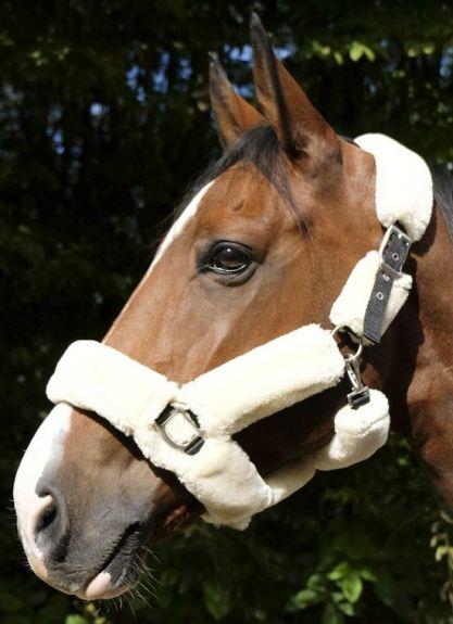 Equitheme Licol Teddy Halster zwart Zwart- Naturel Pony nodig? - ruitershopbeerens.nl