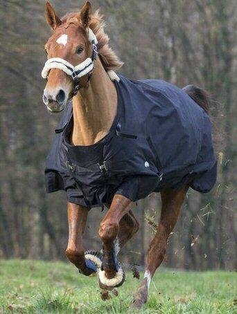 Equi Theme outdoor deken van waterdicht en ademende 600 Deniers Zwart 175 nodig? - ruitershopbeerens.nl
