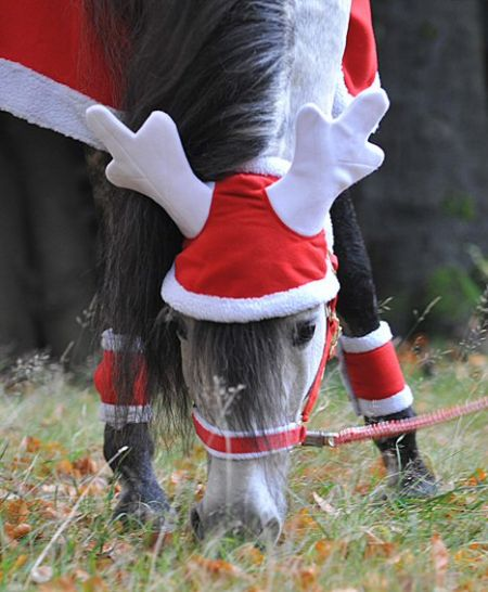 Kerstmis Rendier Gewei voor paard of pony. Rood / Wit Pony nodig? - ruitershopbeerens.nl