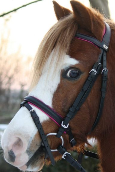 DHH Hoofdstel Lilo Zwart/Roze Pony nodig? - ruitershopbeerens.nl