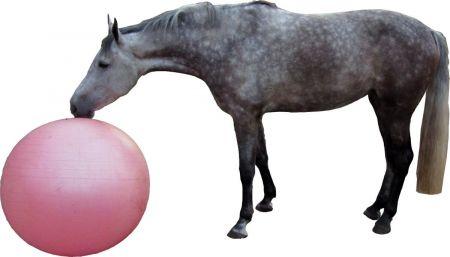 QHP Paardenvoetbal Blauw 100 cm nodig? - ruitershopbeerens.nl
